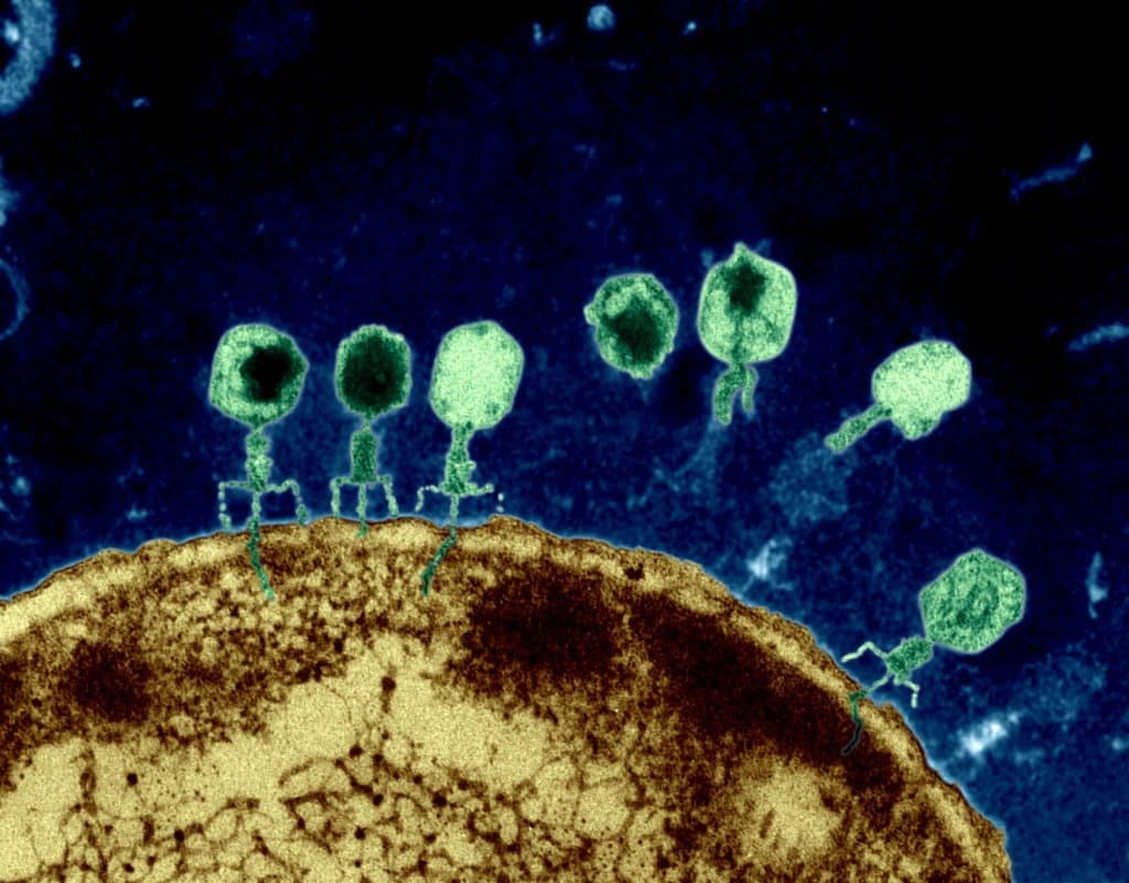 Release the phages!